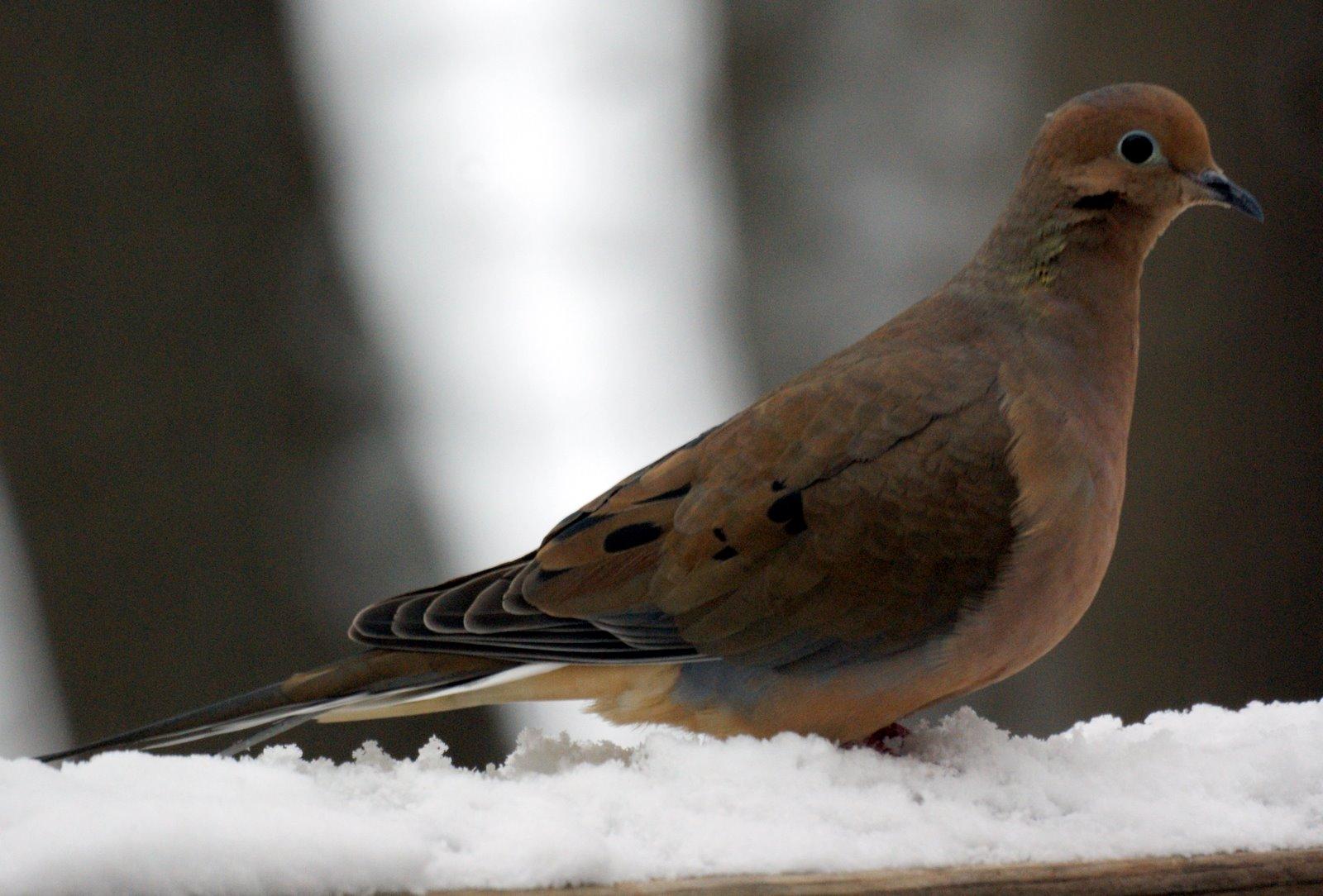 nj bird photos birds of new jersey january 18 2009
